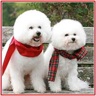 僕とシッポと神楽坂に出てる犬種は?性格や寿命についても気になる
