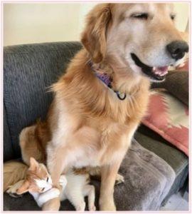 坂上忍,猫,ちくわ,かわいい,犬,画像,ペット