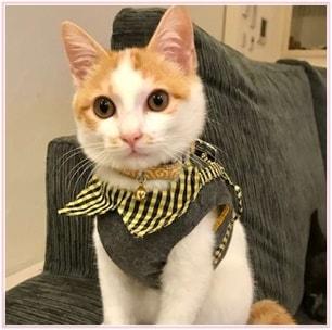 坂上忍の猫ちくわがかわいい!先住犬との仲良し画像も探してみた